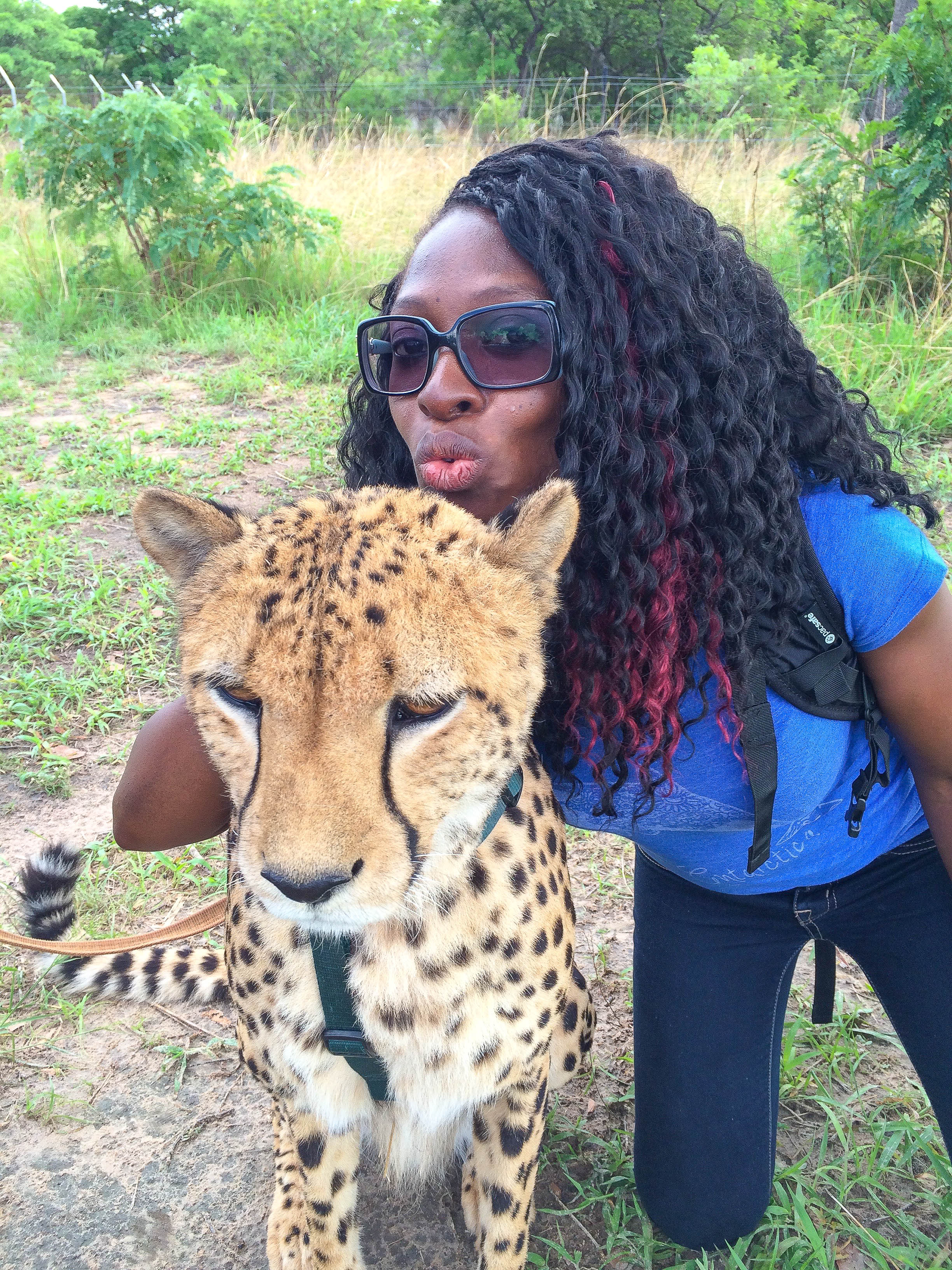Dr. Quinta kissing cheetah
